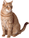 Find out more about our cat sitting services