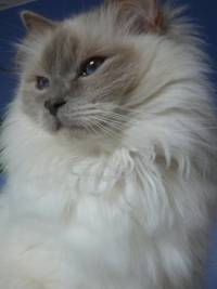 Photo of fluffy cat