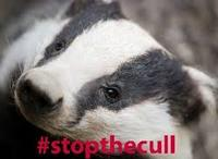 Stop The Cull